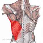 Enkelt förklarat ryggens anatomi