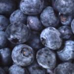Ät blåbär – Skydda magen